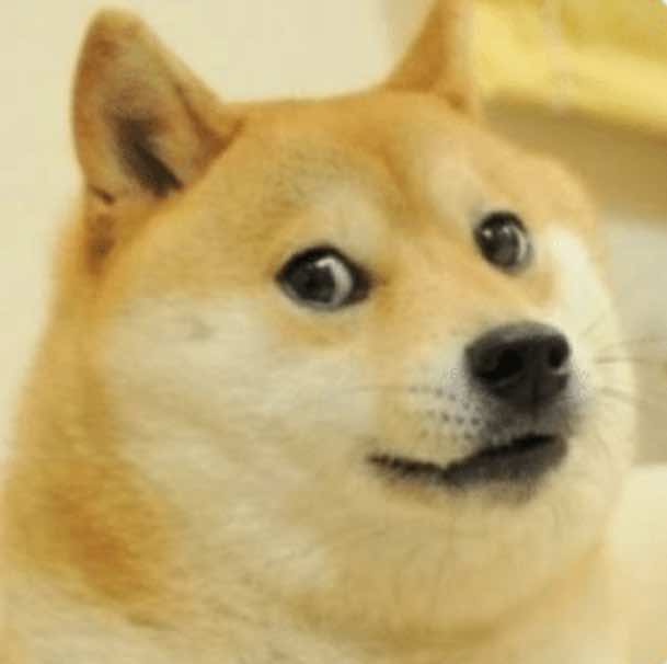Internet Meme Hund Dodge